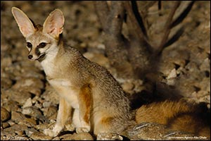 The Environment Agency - Abu Dhabi Launches Abu Dhabi Red List of Wildlife Species Report